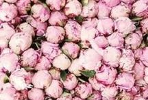 BLOOMS / Flowers | Flower arrangements | Bouquets | Flowers garden | Roses | Peonies