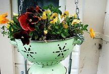 Garden Backyard / by Betsi Goutal - eccentric spirit