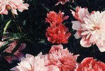 { bloom } / Buy me flowers...
