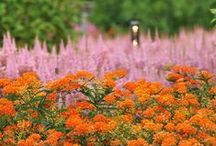 Summer Splendor / In the summertime, the High Line's gardens are so lush and prolific that the landscape appears to transform practically overnight.