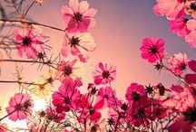 Flowers / by K Hemmer