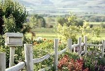 Gardens / by Paige Van Wagoner