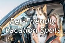 Pet-Friendly Vacation Spots / Pet friendly vacation destinations and travel tips.