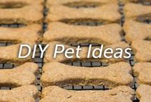 DIY Pet Ideas / At home recipes for pet lovers.