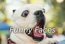 Funny Faces / Hilarious animal expressions captured on film!
