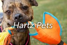 Hartz Pets / For over 80 years, we've made pet products with love, for people like you who love their pets.