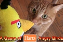 Hartz Cat Toys / For over 80 years, we've made pet products with love, for people like you who love their pets. / by Hartz