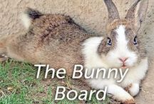 The Bunny Board / by Hartz