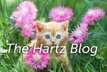 The Hartz Blog / For over 80 years, we've made pet products with love, for people like you who love their pets. Hartz® flea control offers pet parents many solutions to protect your pets and your homes. From flea drops to flea treatments for the home and yard, Hartz® has the solution for you. http://blog.hartz.com/