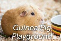 Guinea Pig Playground / by Hartz