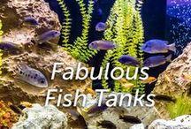 Fabulous Fish Tanks / by Hartz