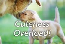 Cuteness Overload! / A collection of of the most cutest and squee worthy animal  pictures on the internet!
