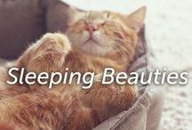 Sleeping Beauties / Adorable photos of sleepy pets! / by Hartz