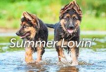 Summer Lovin' / by Hartz