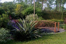 gardens / by Priti Parmar
