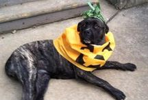 Hartz Fans - Halloween Costumes - / Leave a comment on our Facebook page with a photo of your pet in costume to be added to this pawsome collection! / by Hartz