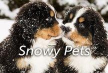 Snowy Pets / by Hartz