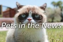 Pets in the News / Pet related news. What's trending?