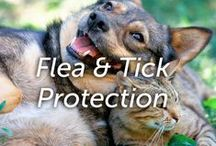 Flea & Tick Protection / We are committed to providing the latest science to effectively eliminate common parasites — including fleas, ticks and mosquitoes — and prevent them from biting or infesting pets and their surroundings. We believe in affordable pest prevention for every pet. That is why Hartz® UltraGuard® Flea & Tick products are broadly available in your local stores. Convenience and affordability with uncompromised quality is our ongoing mission.