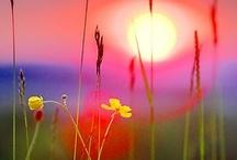 Sunsets / by K Hemmer