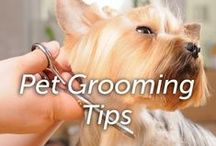 Pet Grooming Tips / Pet grooming tips from the experts at Hartz.