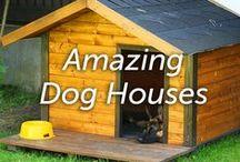 Amazing Dog Houses / by Hartz