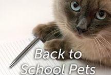 Back To School Pets / by Hartz