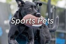 Sports Pets / by Hartz
