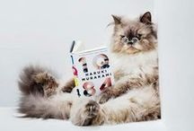 Furry Friends Reading in Spectacles / Because some animals need bifocals, too.