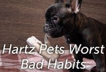 Hartz Pets Worst Bad Habits / Hartz fans share their pet's worst habbit! / by Hartz