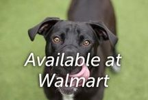 Available at Walmart / by Hartz