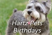 Hartz Pets Birthdays / Have you ever thrown your pet a birthday party? We asked our fans and this is what they said.