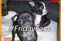 #FridayFace / Share your Friday Face photo with us on Facebook for a chance to win a FREE package of Hartz® Oinkies®! / by Hartz