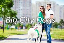 Big City Dogs / Love living life in the big city with your canine partner(s) in crime? You've come to the right place!