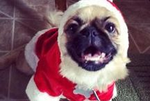 Hartz Holiday Dogs and Cats / Enjoy these festive holiday photos featuring Hartz fans' dogs and cats. / by Hartz