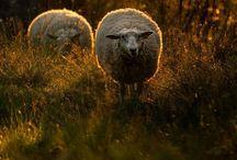 Domestics 7 / Our furry friends near and dear / by Jennifer Gray