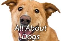 All About Dogs / Helpful tips for you and your K9 friend.  / by Hartz