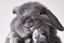 cute furry things / by Julie Compton
