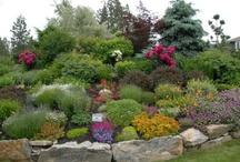 Yard/Gardening