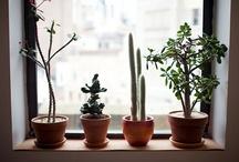 plants + garden / by Jamie Lynn