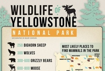 Yellowstone or Bust!