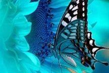 Beautiful / by Alison Kelley