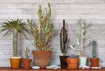 Succulents (Are Not Cacti)