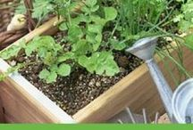Grow It (and save Green) / Growing your own vegetables and fruits can be  great way to save money.  These pins will help you on your frugal gardening journey.