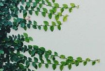 Planty Inspiration / I love plants. They're inspiring. They make me want to use exclamation marks. !
