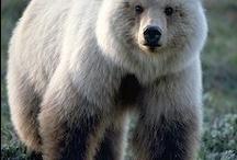 Bears... / by JoAnn Rogers