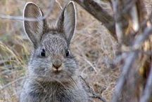 Bunnies/rabbits/art/photos... / by JoAnn Rogers