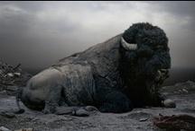 Buffalo/Bison... / by JoAnn Rogers