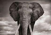Elephantine / by Christine Crofts