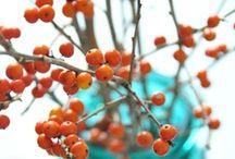 Orange you glad I like Orange?